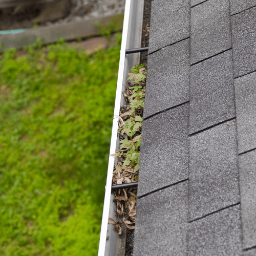blocked-gutter-drains-optimised-plumbing-services