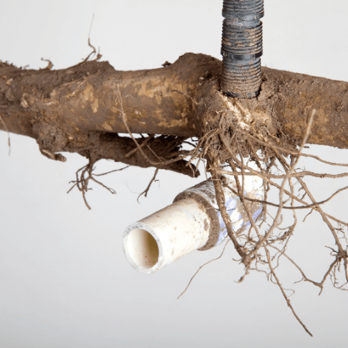 blocked-drains-with-tree-roots-optimised-plumbing-services